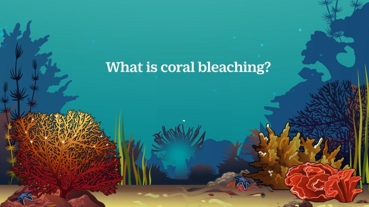 coral bleeching