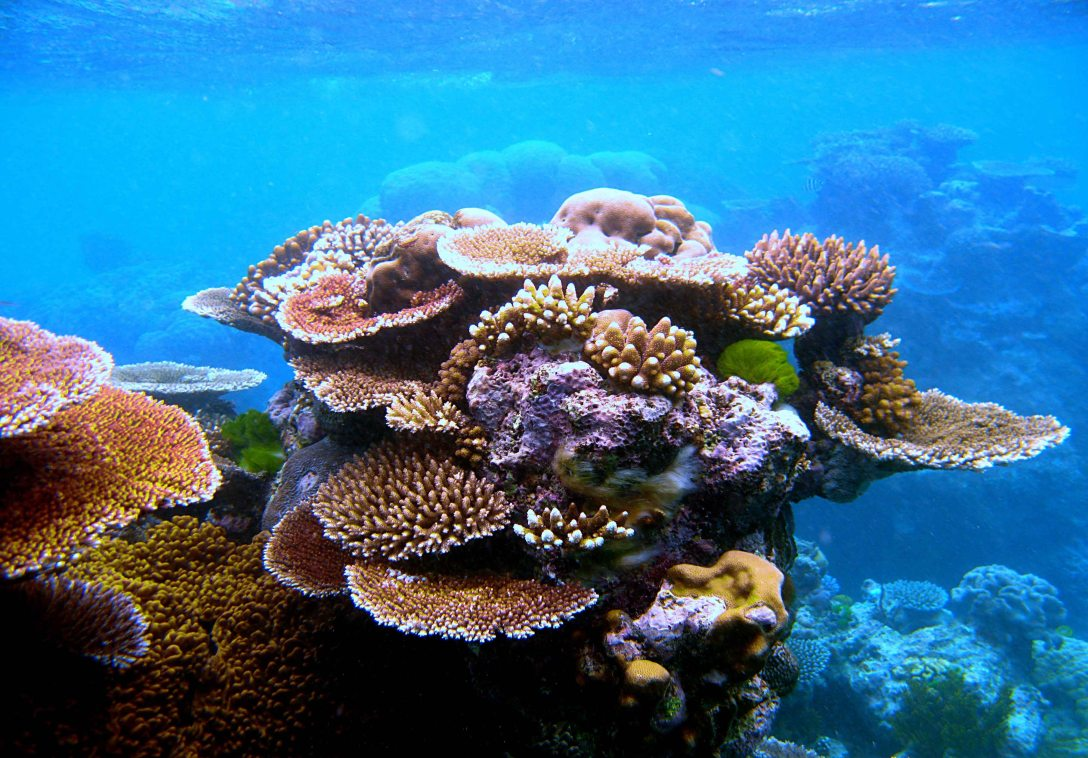 coral reefss.jpg