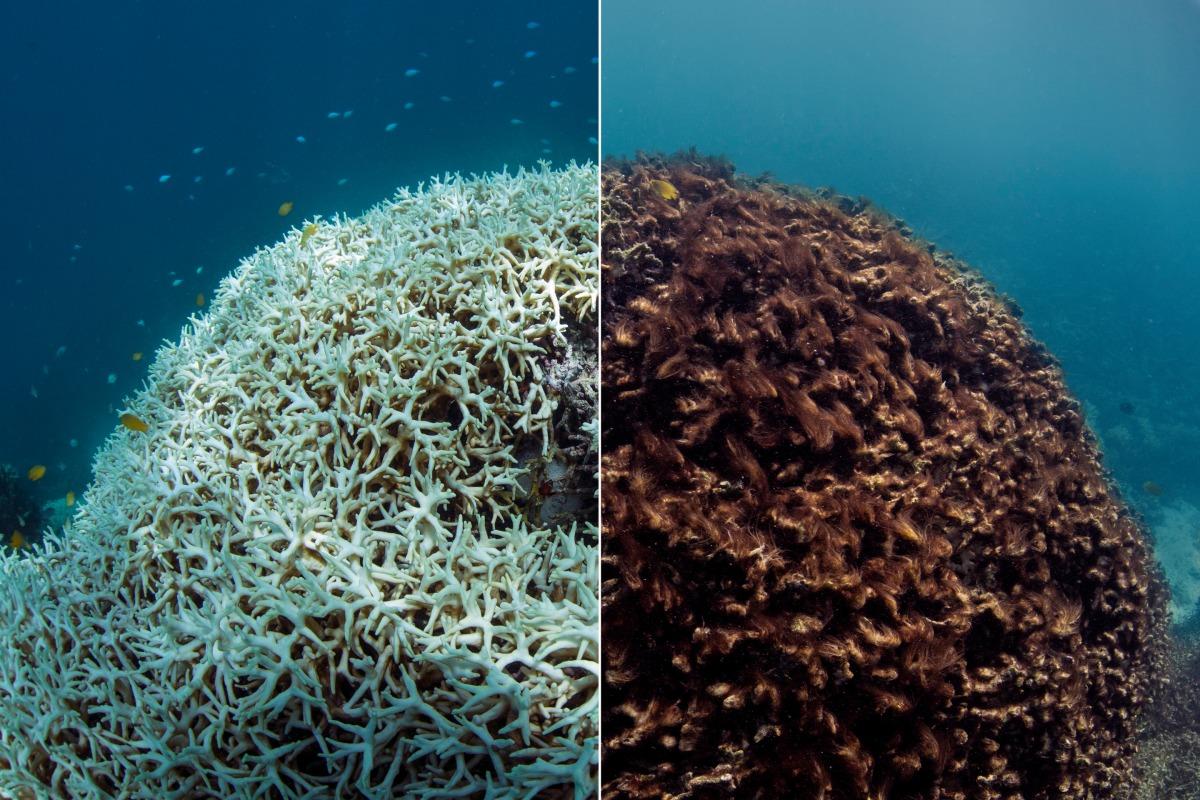 corsl reef bleeching.jpg