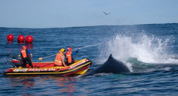 whale detanglemnt team