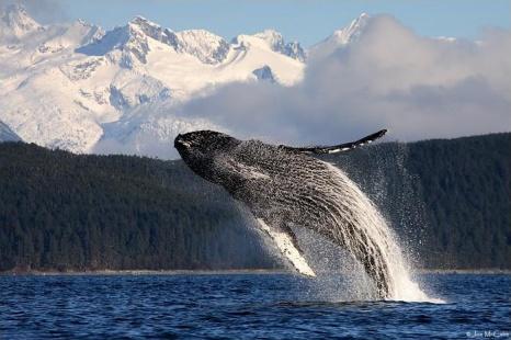 whale-humpback1-700w.jpg