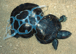 turtle plastic pollution