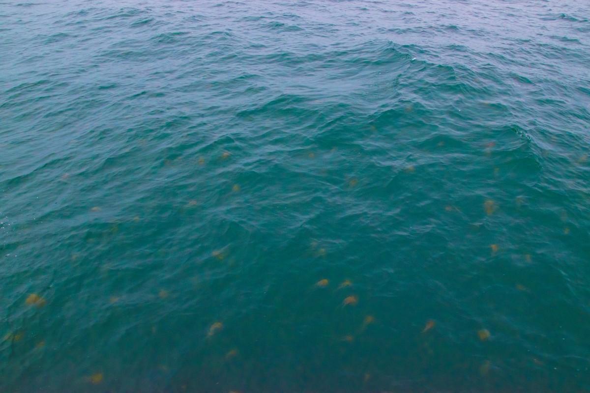 jelly fish .jpg
