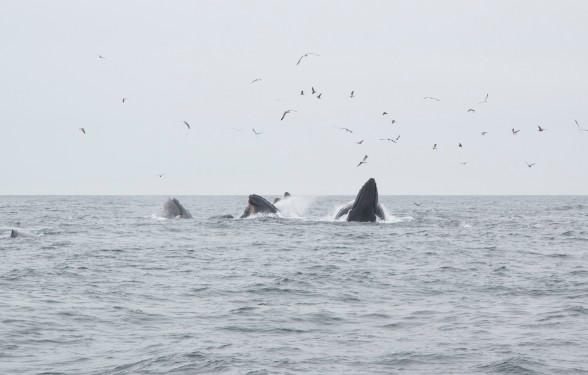 whale watching _7